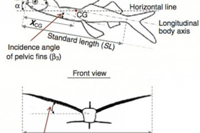 flyingfishchart.jpg