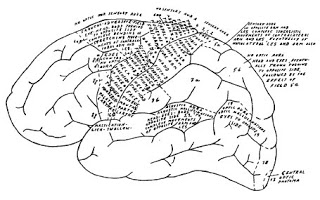Foerster_Penfield_cortical_map.bmp