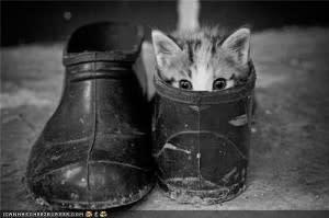 shoe-300x199.jpg