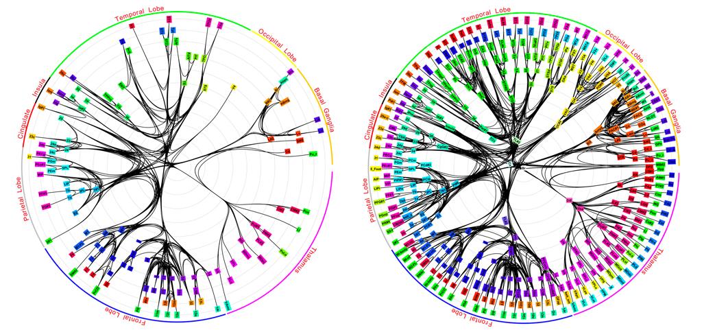 mapping-the-monkey-brain.jpg
