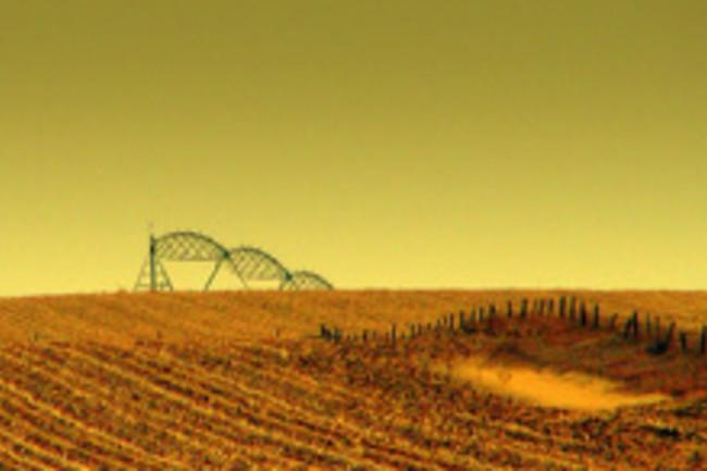 cornfield.jpg