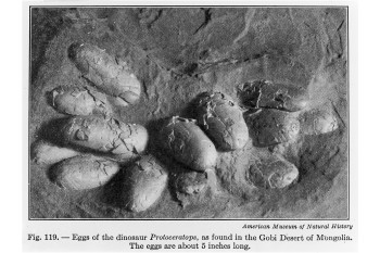 Fossil Eggshells Suggest All Dinosaurs May Have Been Warm-Blooded