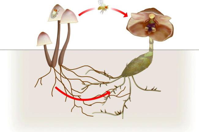 flower-mushroom-graphic-1024x804.jpg