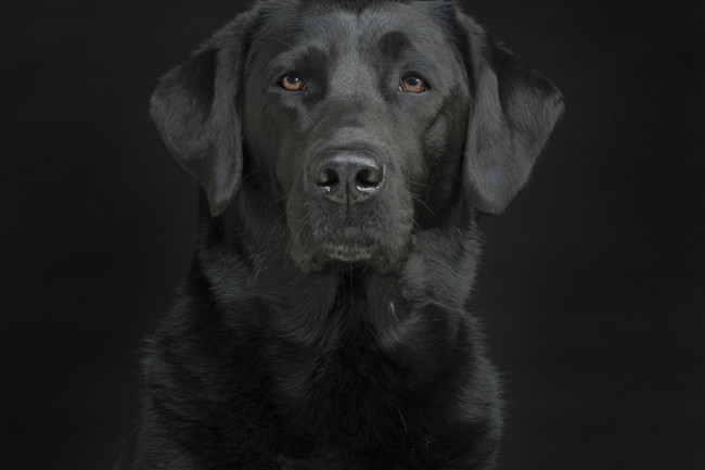 Dog Portrait - William Zuback/Discover