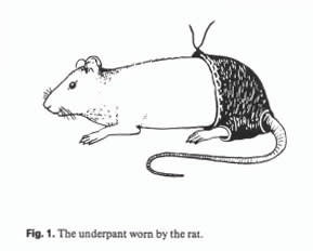 the-underpant-worn-by-the-rat1.jpg