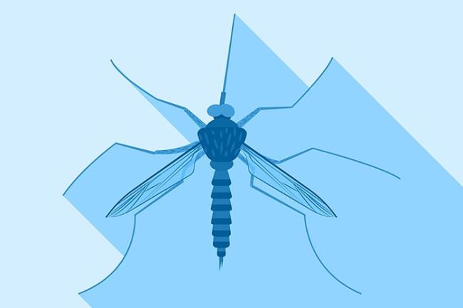 DSC-CR1119 08 mosquito stock