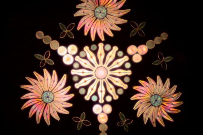 diatoms2.jpg