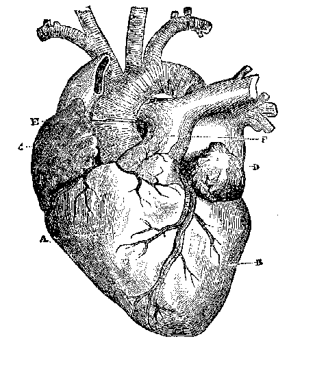 heart_pic.png