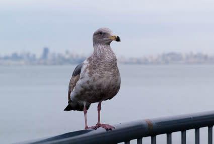 Bird-425x285.jpg