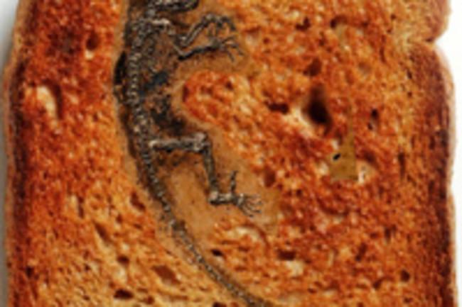 Darwinius-on-toast.jpg