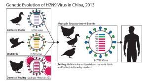 h7n9-reassortment-diagram-300x165.jpg