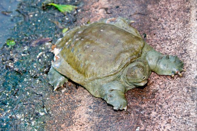 turtle-urine.jpg