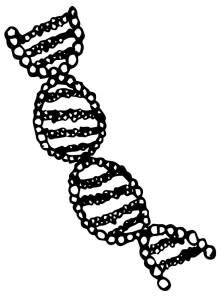 dna-drawn-221x300.jpg