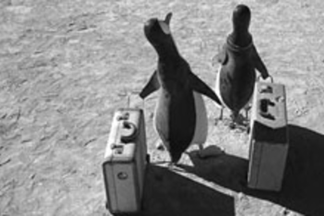 penguins-with-suitcases.jpg