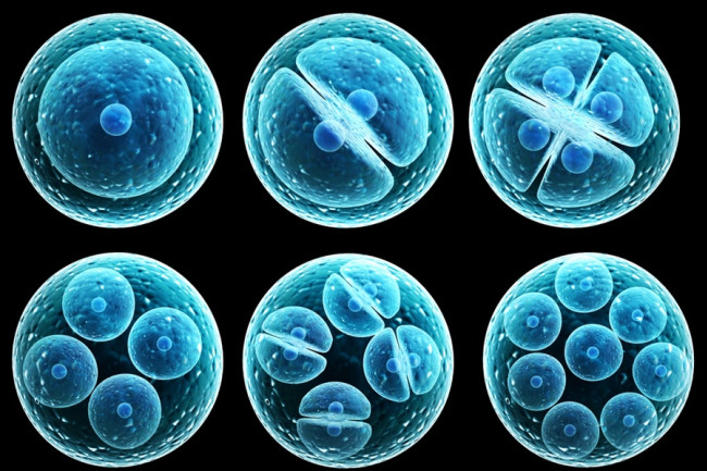 Everything Worth Knowing About ... Stem Cells | Discover Magazine