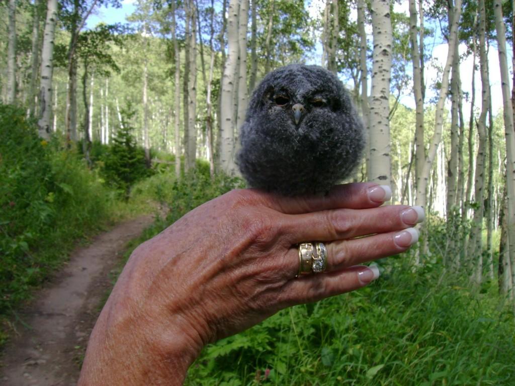 Flammulated-Owl-1024x768.jpg
