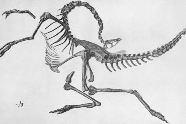 Struthiomimus_skeleton_jconway-1024x657.jpg