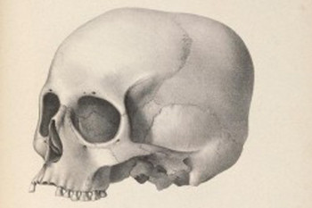 Lost Research Notes Clear Up Racial Bias Debate in Old Skull Size Study