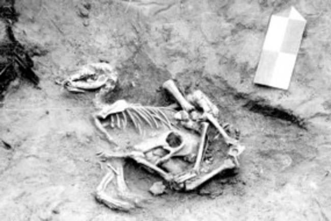 Dog-Burial-300x190.jpg