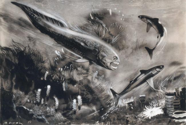 Dinichthys herzeri - Alamy