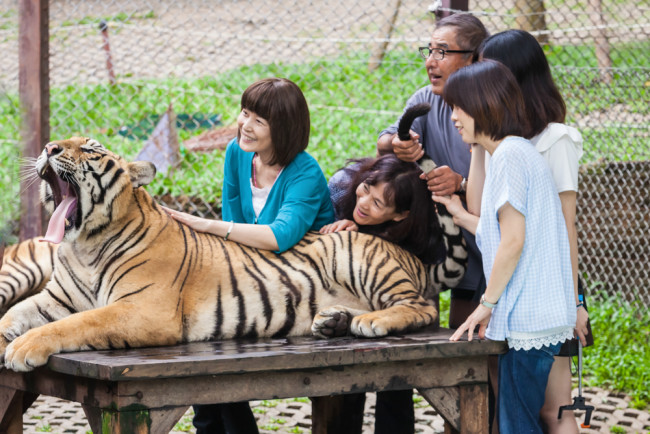 tiger petting zoo - shutterstock