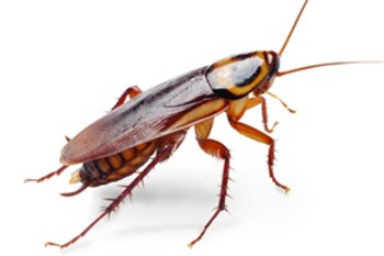 The Roach Replication Crisis