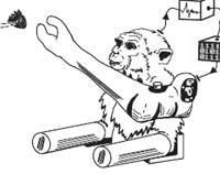Monkeyreach.jpg
