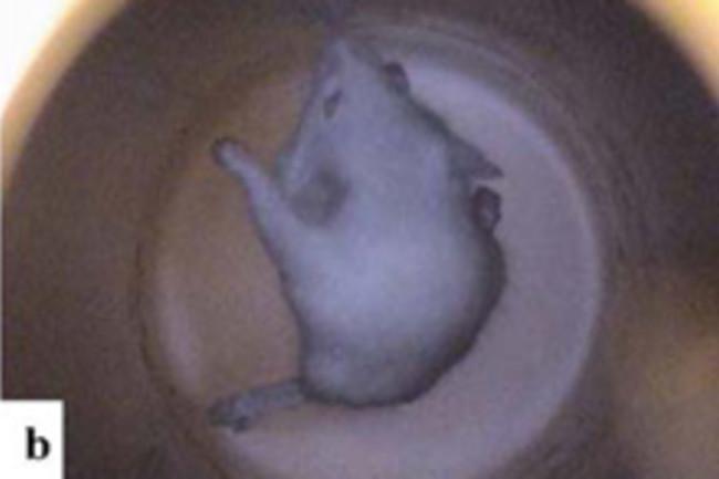 levitating-mouse.jpg