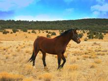 horse220.jpg