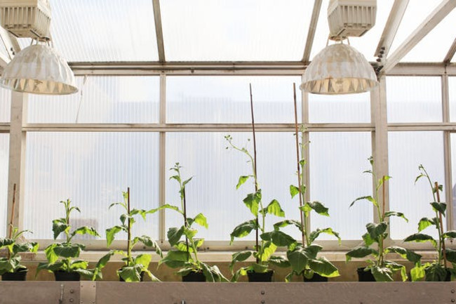 Engineered Plants - CCBY