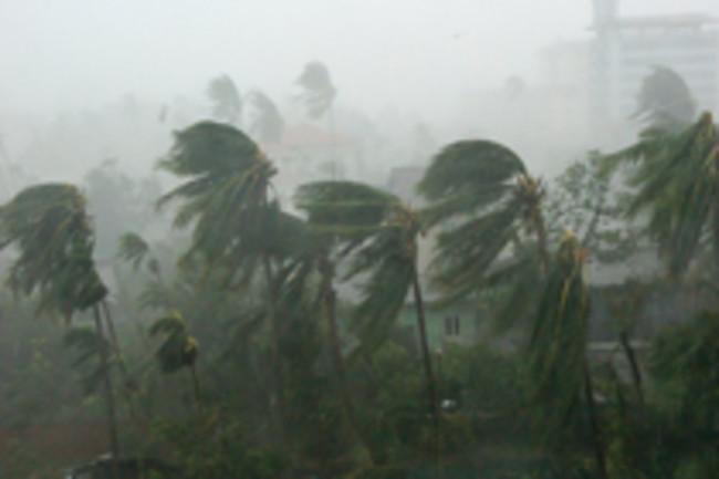 cyclone-trees.jpg
