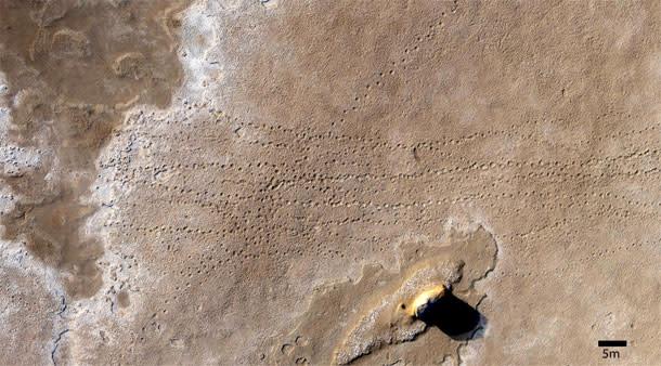 Fossil-trackway.jpg