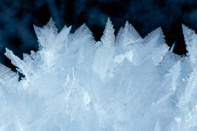 Crystalline-Forest-2.png