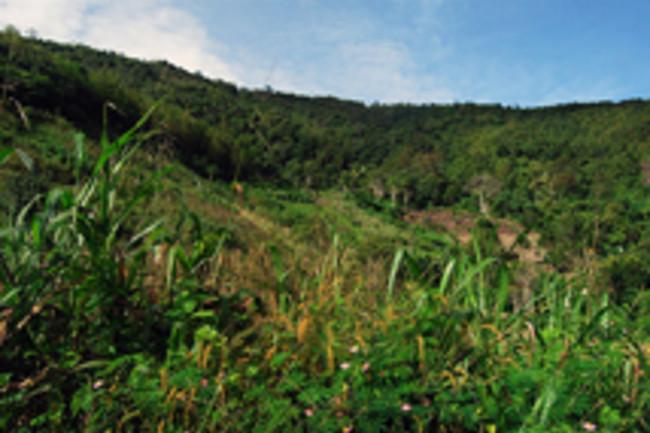 hillside220.jpg