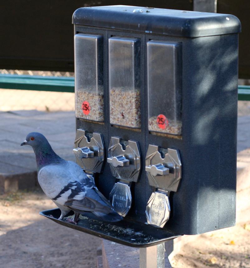 pigeon-slot-machine.jpg