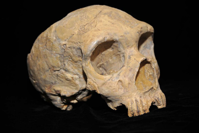Neanderthal_skull_from_Forbes_Quarry-1024x682.jpg