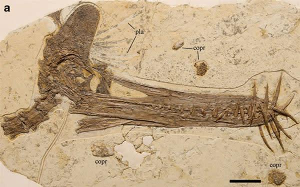 flying-reptile-pterosaur-guidraco-venator-naturwissenschaften-springer.jpg