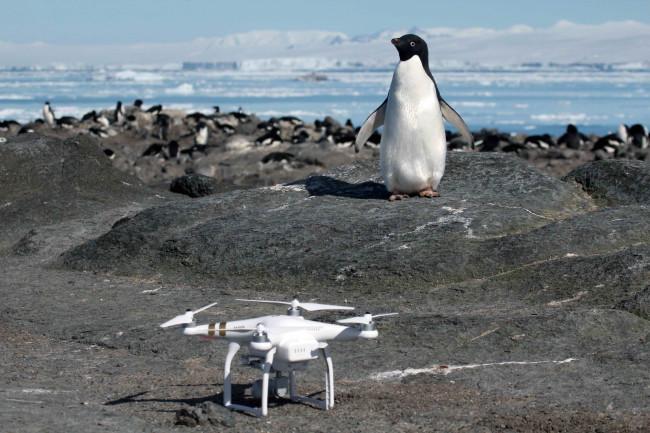 Penguin and Drone - Stony Brook