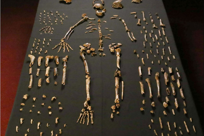 Homo naledi Skeleton - Lee Roger Berger