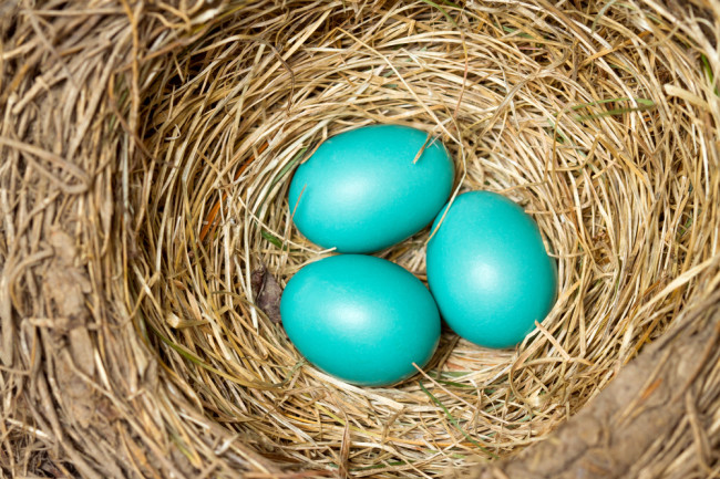 Robin's Eggs - Shutterstock