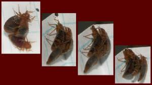 bedbugs-300x168.jpg