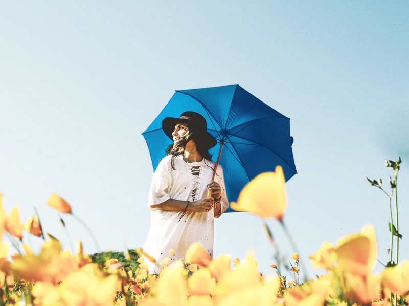 Image of a woman walking through a field of daffodils with a blue umbrella
