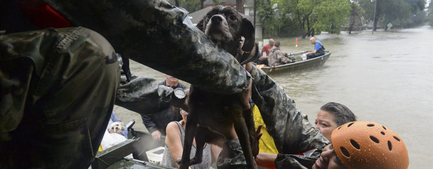 Helping Animals in the Wake of a Natural Disaster Hero