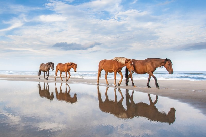 Just 2.5 hours away from Raleigh and you'll find yourself on a lovely beach with wild horses roaming the sand.