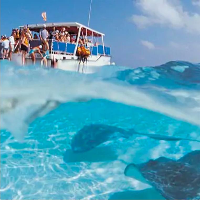 Underwater shot of stingrays and boat