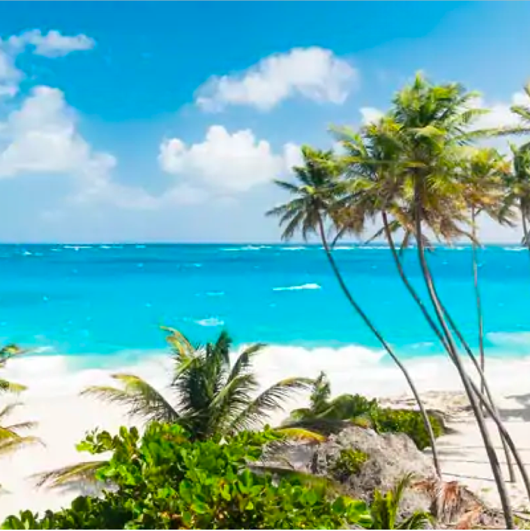 Paradise beach with palm trees and white beach.