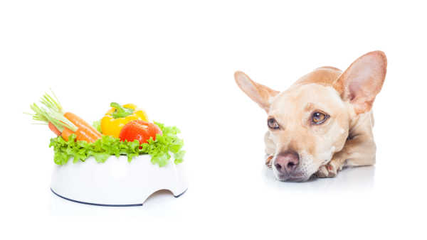 Vegan Dog Food: Everything You Want To Know