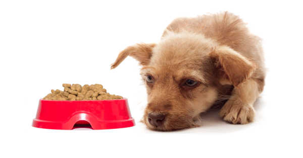 Dog Not Eating? We Can Tell You Why...