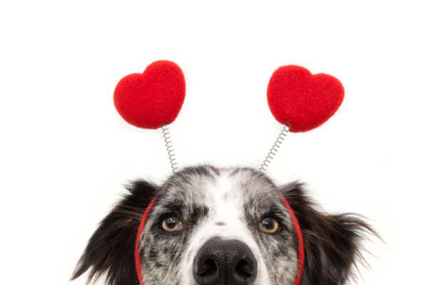 The 8 Best Way To Spend Valentine's Day With Your Dog