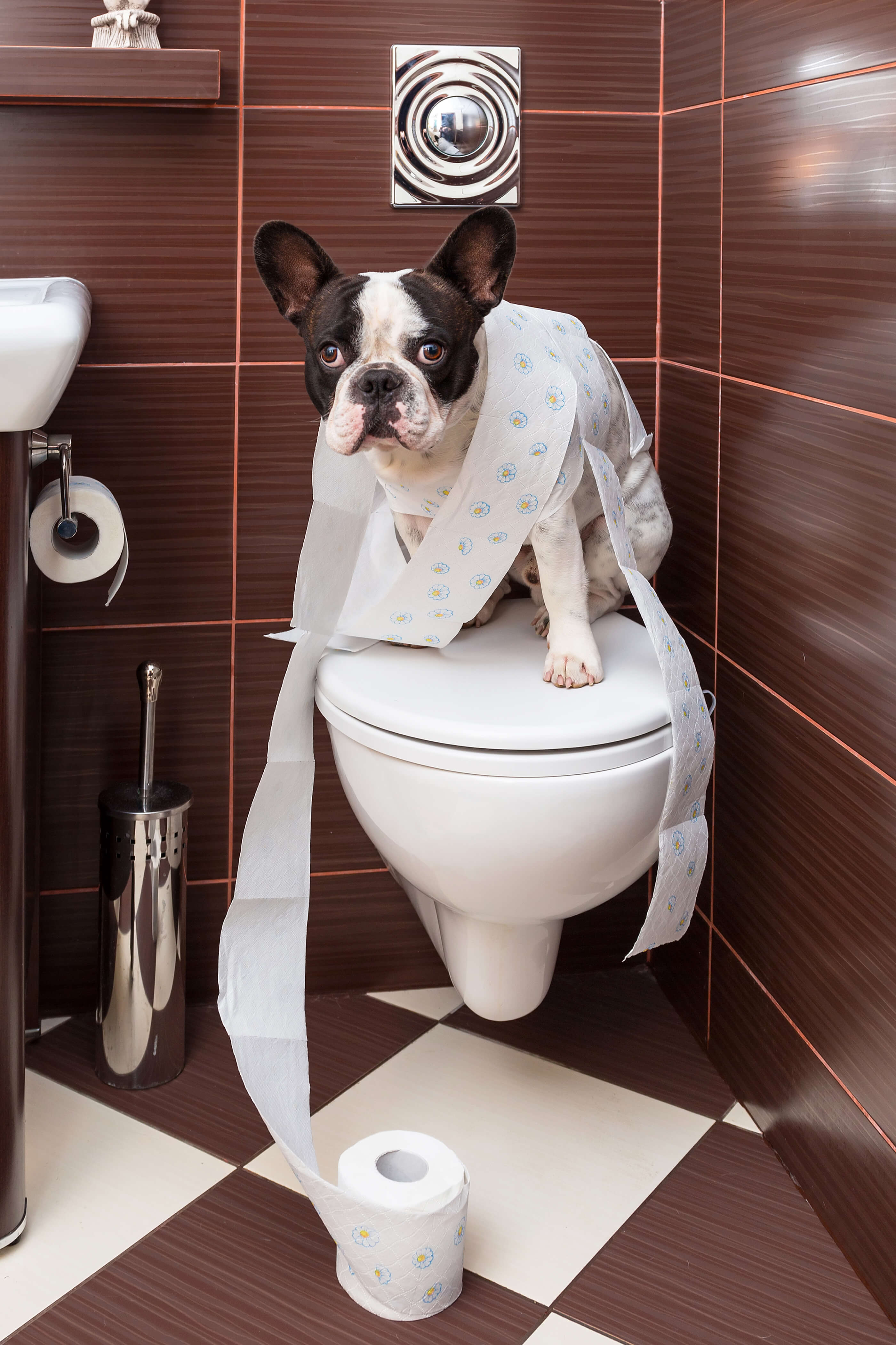 dog with spread toilet paper in bathroom